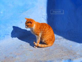 地面に座ってオレンジと白猫の写真・画像素材[1618375]