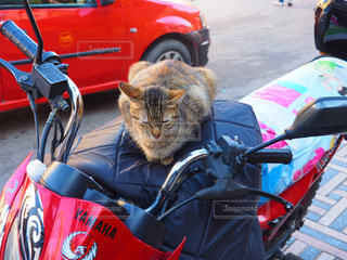バイクの上に座って猫の写真・画像素材[1618377]