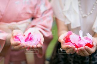 ピンクの花の小さな女の子の写真・画像素材[1618561]