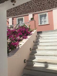ピンクの花は建物の前に立っています。の写真・画像素材[1618643]