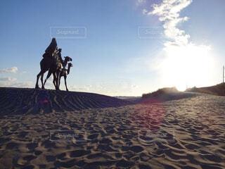 浜辺でラクダに乗る像の写真・画像素材[1620515]