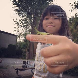 木の部分を保持している小さな女の子の写真・画像素材[1620525]