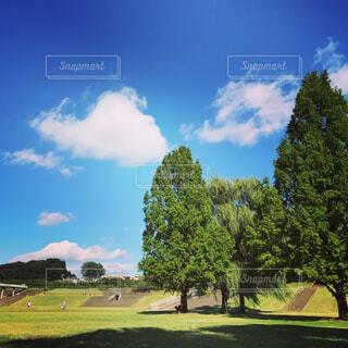 緑豊かな緑の草原の写真・画像素材[1620530]