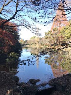木々 に囲まれた水の体の写真・画像素材[1620590]