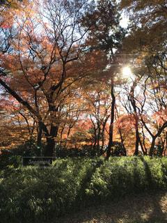 公園の木の写真・画像素材[1620592]
