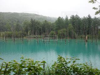 木々 に囲まれた青い池の写真・画像素材[1620262]
