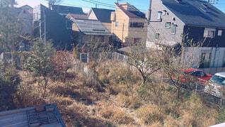 草木の生い茂る空き地の写真・画像素材[1620282]