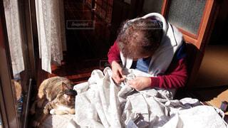 猫とおばあちゃんの写真・画像素材[1628693]