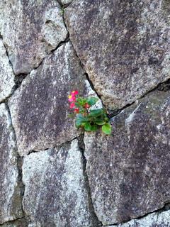 石の壁の写真・画像素材[1631884]