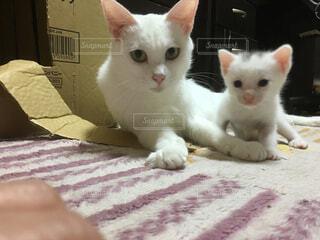 猫三昧の写真・画像素材[141213]