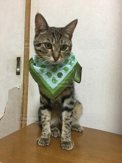 猫三昧の写真・画像素材[143247]
