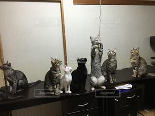 猫が好き - No.205417
