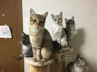 猫が好きの写真・画像素材[276293]