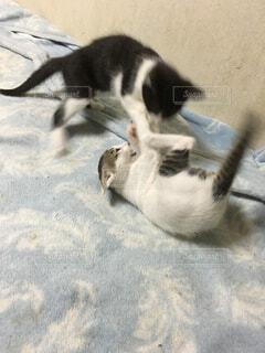 猫が好きの写真・画像素材[312195]