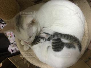 猫の写真・画像素材[317157]