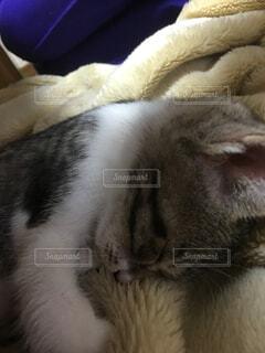 猫の写真・画像素材[317993]