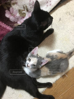 猫の写真・画像素材[323510]