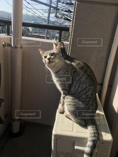 猫の写真・画像素材[323601]