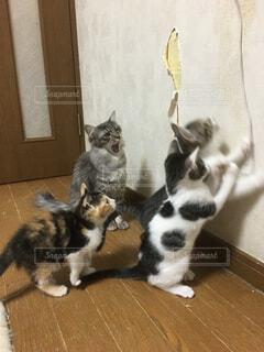 猫の写真・画像素材[323893]
