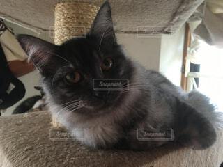 猫の写真・画像素材[324316]