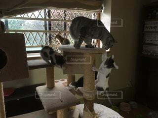 猫の写真・画像素材[331832]