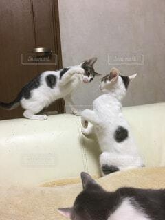 猫の写真・画像素材[332803]