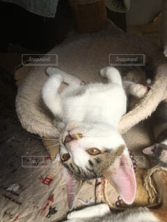 猫 - No.346081
