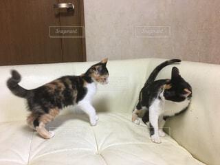 猫の写真・画像素材[367311]
