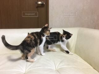 猫の写真・画像素材[367312]