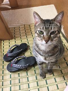 下駄と猫の写真・画像素材[733468]