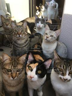 カメラにポーズを鏡の前で座っている猫の写真・画像素材[923508]