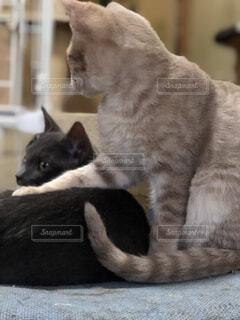 横になって、カメラを見ている猫の写真・画像素材[957365]