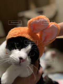 近くに猫のアップの写真・画像素材[1025092]