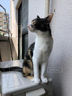 建物の前に座っている猫の写真・画像素材[1144157]