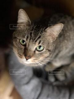 横になって、カメラを見ている猫の写真・画像素材[1822383]