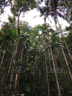 森の中のヤシの木の写真・画像素材[1625599]