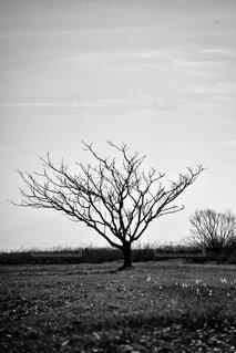 草原の木の写真・画像素材[2809395]