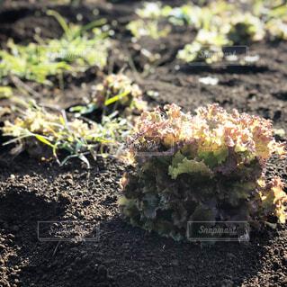 近くの植物のアップの写真・画像素材[1626734]