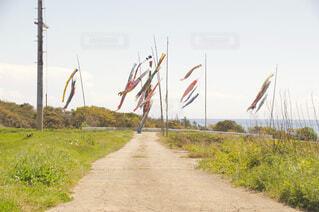 佐渡島の鯉のぼりの写真・画像素材[2483946]