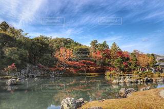 天龍寺の庭園の写真・画像素材[1628780]