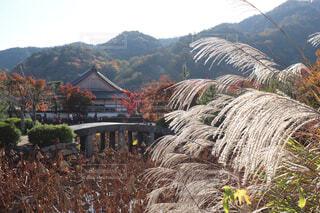 京都の秋の写真・画像素材[1628782]