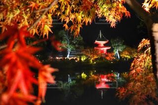 京都の紅葉の写真・画像素材[1628783]