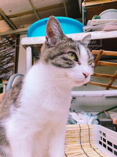 座り猫の写真・画像素材[1630117]
