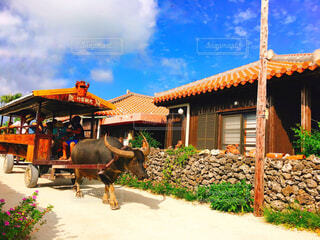 竹富島の風景と水牛車の写真・画像素材[1630278]
