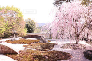 庭園に咲く桜の写真・画像素材[1648855]