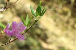 植物にピンクの花の写真・画像素材[1648859]