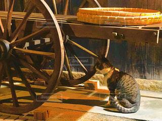 灯りに照らされ佇む猫の写真・画像素材[1629948]