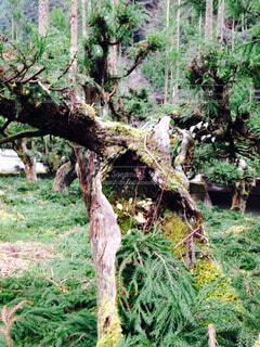 森林 - No.62692