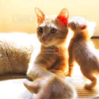 猫の写真・画像素材[56575]