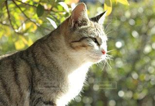 猫の写真・画像素材[56579]